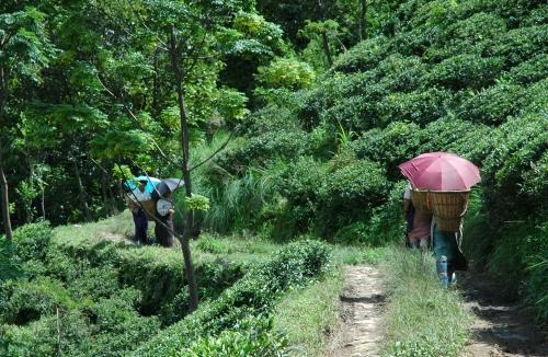 Darjeeling_2ndMS_Special01