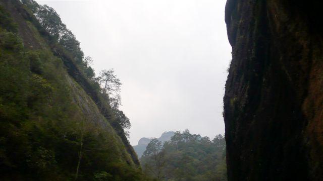 DaHongPao04